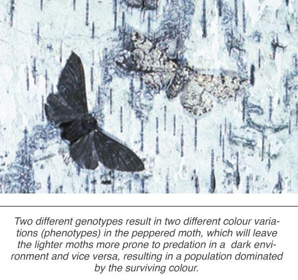 living_organisms_4a